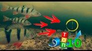 ТОП 10 Самых Лучших Атак Окуня на Балансир и Блесну - Рыбалка