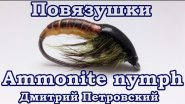 Повязушки. Ammonite nymph