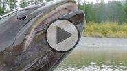 Первый апрельский таймень пойман на воблер р горин хабаровский край