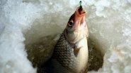 5 рецептов самодельной прикормки для зимней рыбалки. Рыбалка зимой.