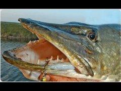 Рыбалка на Ангаре ловля щук на блесну вертушка.