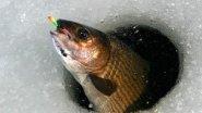 Зимняя рыбалка осень 2015и весна 2016 р Кунгус