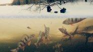 Ловля Плотвы и Окуня на Мормышку | Зимняя Рыбалка 2017