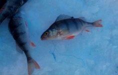 насадки для успешной рыбалки