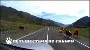 Горный Алтай: Чуйский тракт от слияния рек Чуя и Катунь до с.  Акташ...