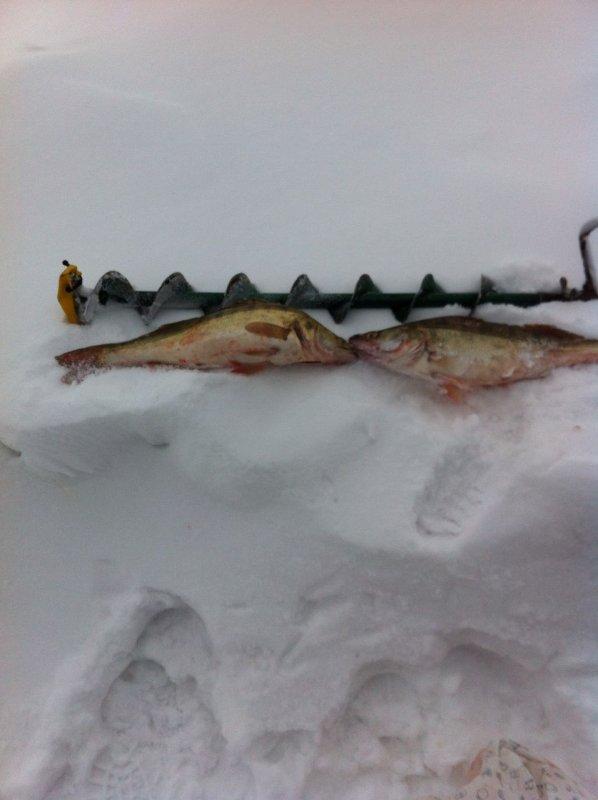 Рыба зашевелилась в низовьях ОВХ.