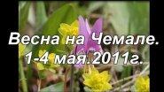 Алтай веснаЧемал