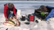 В северной америке ловят весной судака