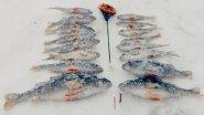 Зимняя Рыбалка на Окуня | Ловля на Мормышку