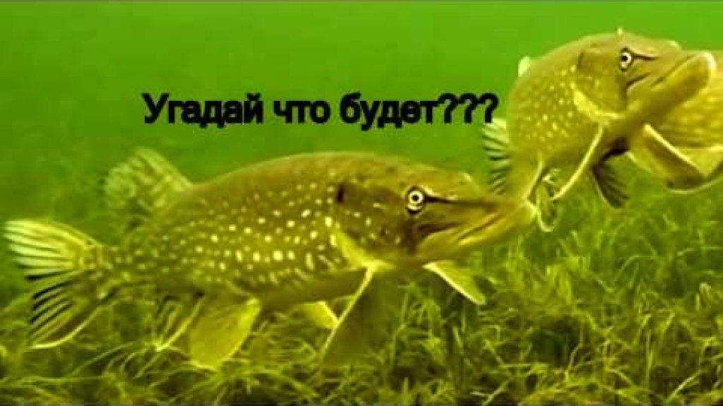 Приколы на рыбалке смех до слез