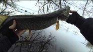 Рыбалка Live. Ловля щуки весной на воблеры и джиг