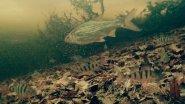 Зимняя Прикормка Подводные Съемки / Подводная Камера на Рыбалке
