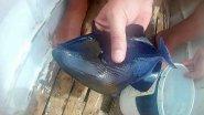 Ловля рыбы первобытной донкой. Рыбалка на Филиппинах