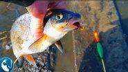 Как поймать вимбу в проводку. Ловим на поплавок в апреле. Готовим на природе | Рыбалка с Родионом
