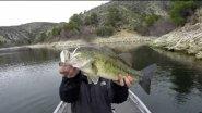 Красивые поклевки и вываживания рыбы! Longasbaits PDL Rig