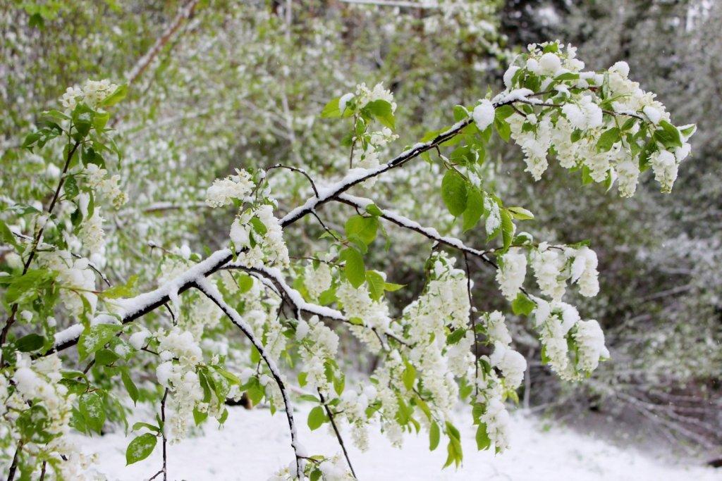 Красивая сибирская весна
