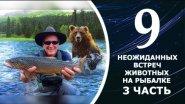ТОП 9 неожиданных встреч с животными на рыбалке