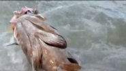 Атака приманки морским окунем, жесть
