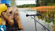 Рыбалка на пруду в мае. Поиск карася. Готовим на природе. Пролет на рыбалке | Рыбалка с Родионом