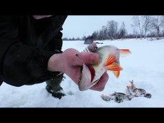 Рыбалка в глухозимье. Мормышка, балансир. Видеоотчет 1. Республика Коми.