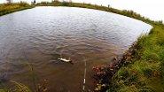 Рыбалка. Щуки на спиннинг осенью. Замормные места.