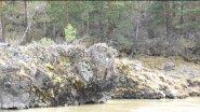 Алтай и на камнях растет маральник (багульник) в 4К.