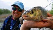 Ловля голавля взабродку на реке Южный Буг