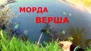 Рыболовная снасть верша, морда в действии. Вот это улов)))