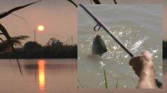 Моя рыбалка 5-13. Белый амур.