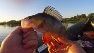 Рыбалка на окуня / Попал на раздачу ,не зря подсак брал