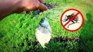 Лайфхак как защитить рыбу от мух