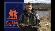 Рыбалка на Волхове - 2. Наловили пуд рыбы за утро!