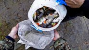 Рыбалка на поплавочную удочку. Только закидывай.