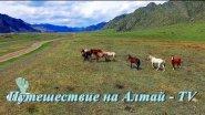 У подножия гор  Алтая - 2017.