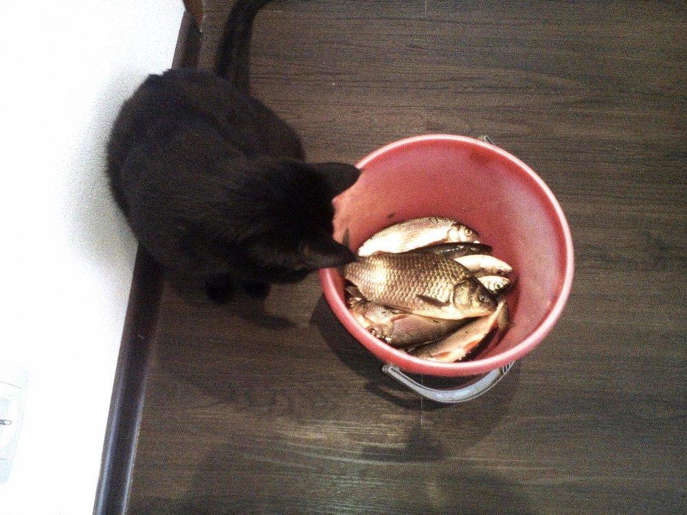 Ну, чего молчим, рыбка золотая?