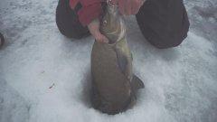 Зимняя рыбалка. Лещ на 1750. Куда делась щука?