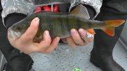 Рыбалка на щуку и как сохранить рыбу в жару
