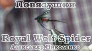 Повязушки. Royal Wolf Spider
