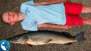 Ловля трофейной щуки летом на троллинг на реке Даугава. Рыбалка на воблер