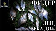 Рыбалка на фидер. Лещ. Река Дон. (LIveFishing)