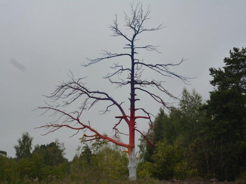 Цветное дерево!!!