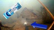 Жевательная резинка ORBIT в действии! Подводное видео