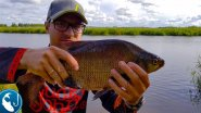Ловля больших лещей в августе. Как поймать большого леща на канале на #фидер | Рыбалка с Родионом