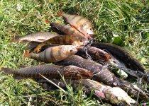 Улов озерных хищников