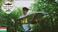 [HD] Czech Fishing: Grass Carp with Common Reed