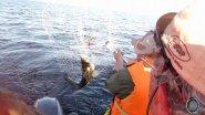 TROLLING. Небольшой обзор приманок, на которые в этом году лучше всего ловился судак на Ладоге.