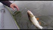 Рыбалка сплавом по реке Ловля голавля и окуня на спиннинг
