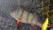 А вы знали что влияет на клев рыбы? Секреты профессионала