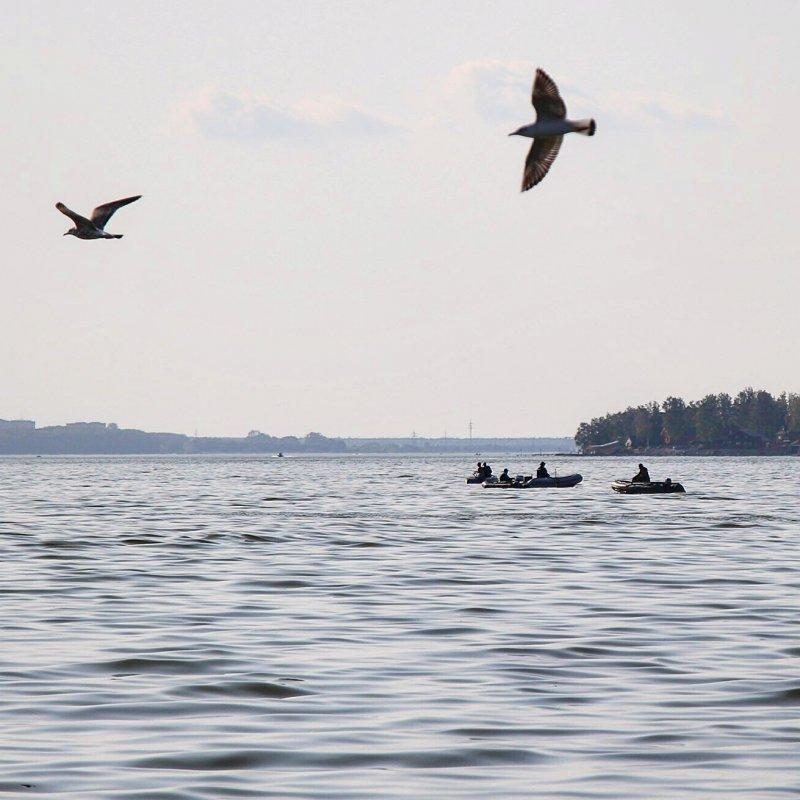 Заядлые рыбаки