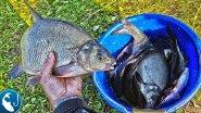 Эксперимент с прикормкой. Ловля леща на фидер в сентябре на реке Лиелупе. | Рыбалка с Родионом